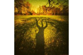 Tree Spirit | 2016