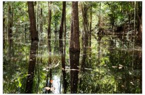 Amazzonia | 2016